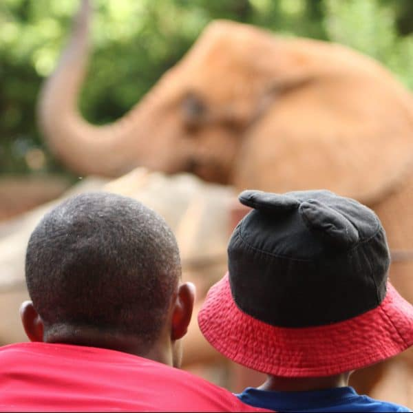Father and son watch an elephant